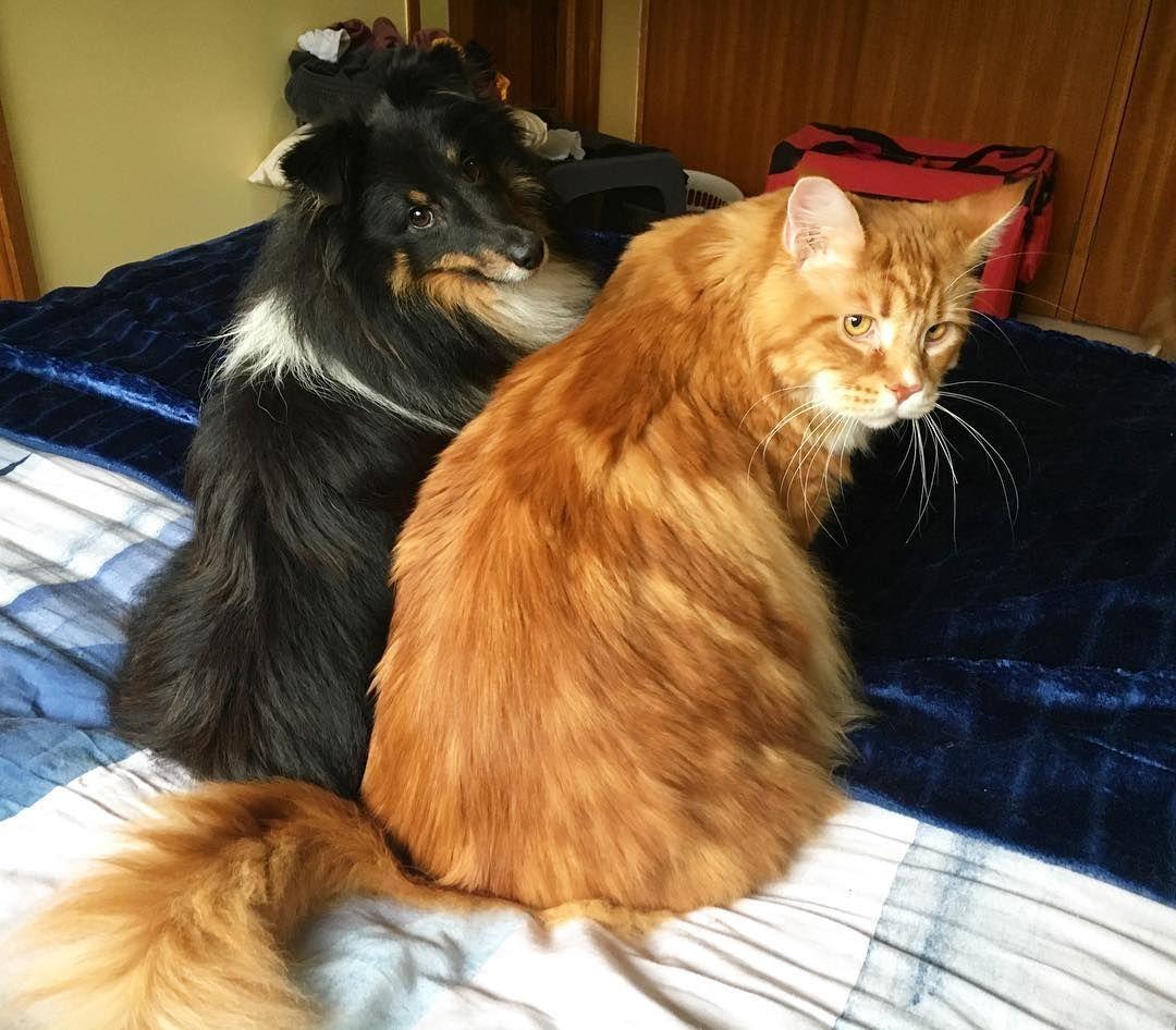 Epingle Sur Feline