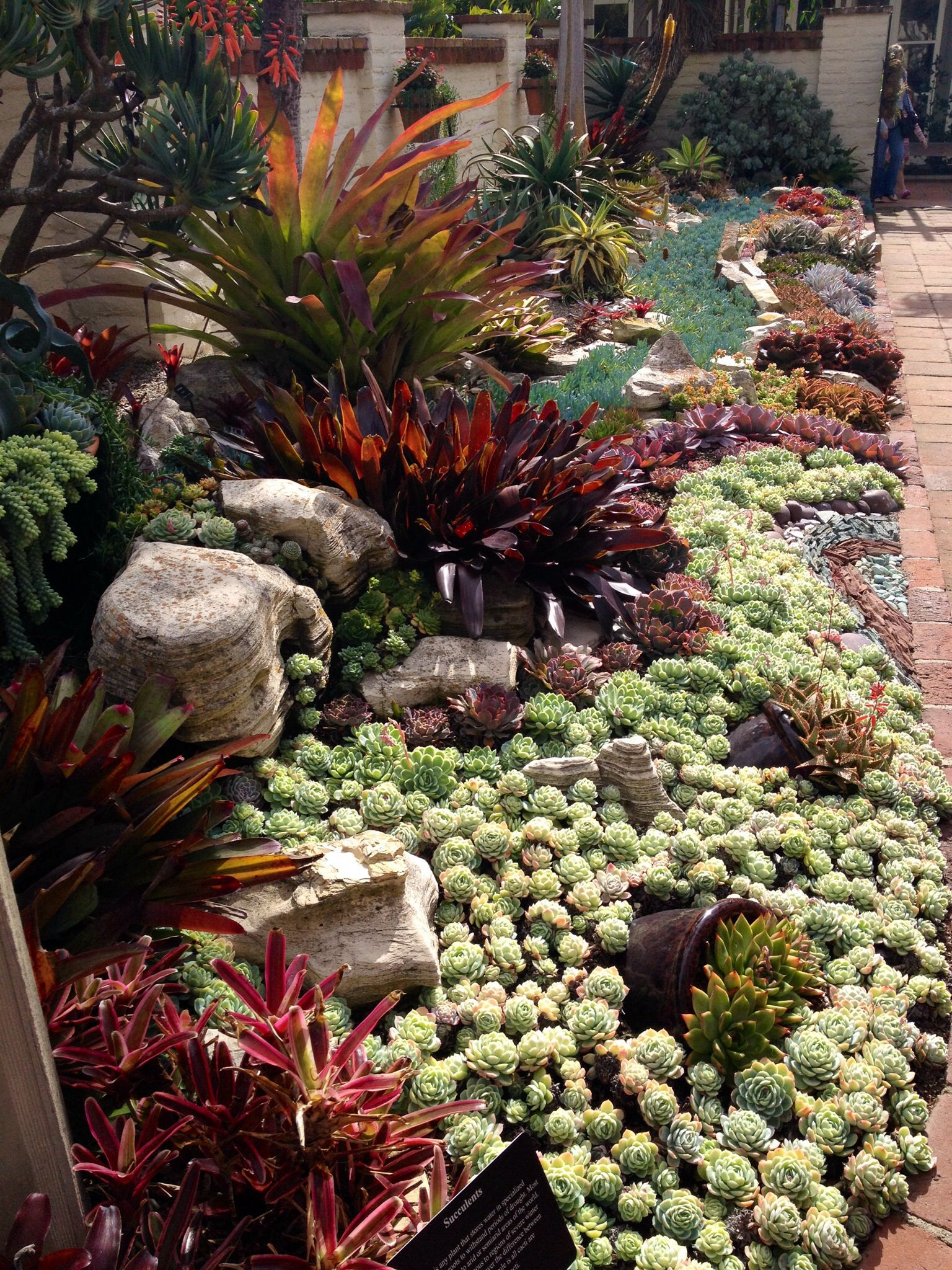 Botanical Gardens Corona Del Mar Ca