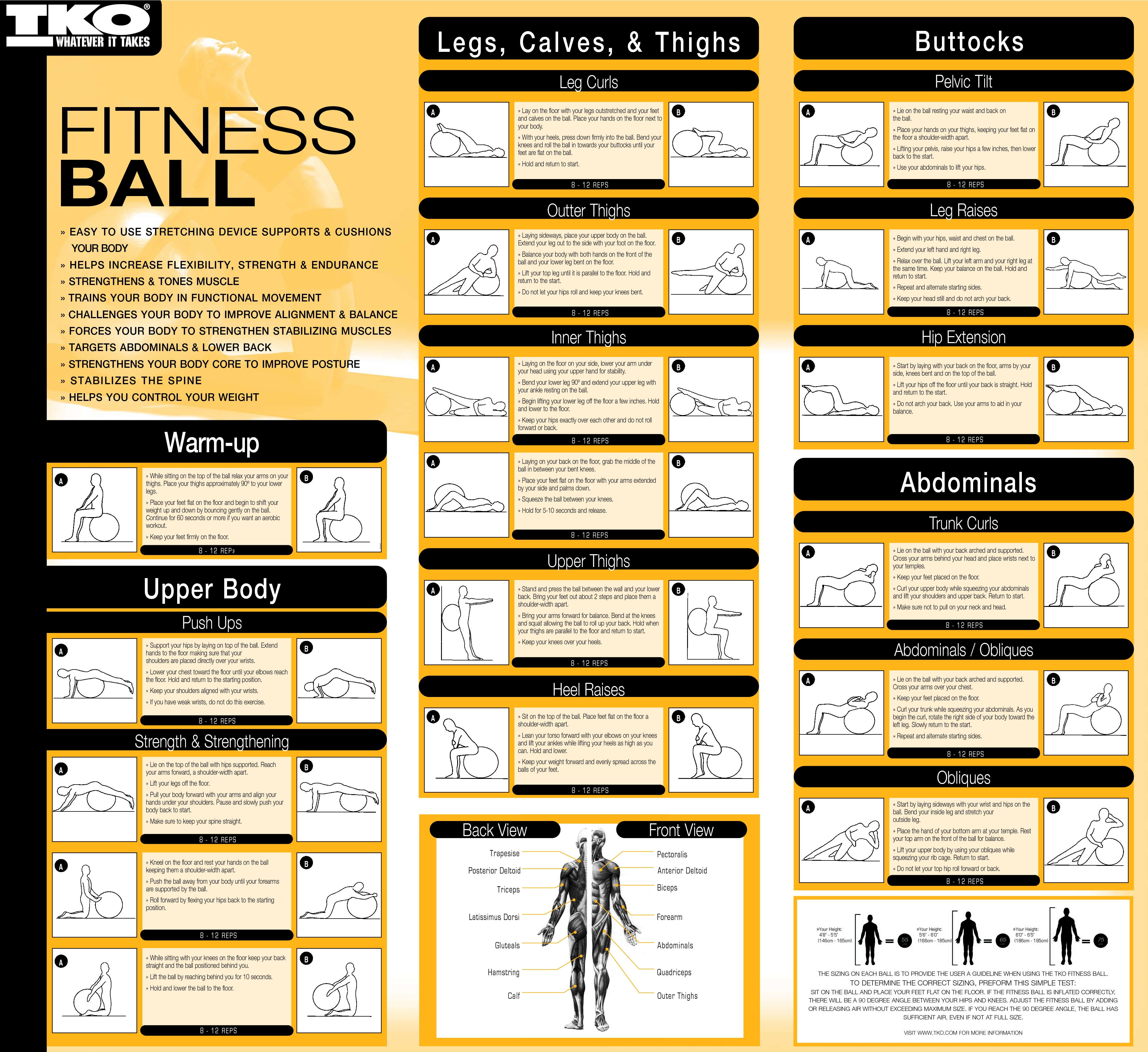 gym ball exercises for beginners pdf