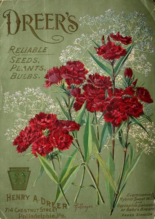 Pin By Sande Sivani On Seed Packets Vintage Flowers Vintage Seed Packets Flower Seeds Packets