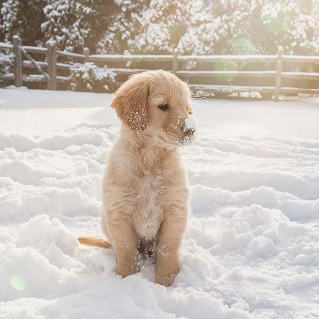 Snow Makes Everything Look Stunning Just Look At This Puppy