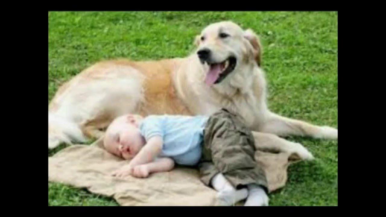 Pin By Estrahaaa On Dogs Humans Labrador Retriever Golden Retriever Animals