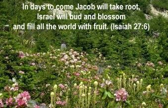 Isaiah 27:6