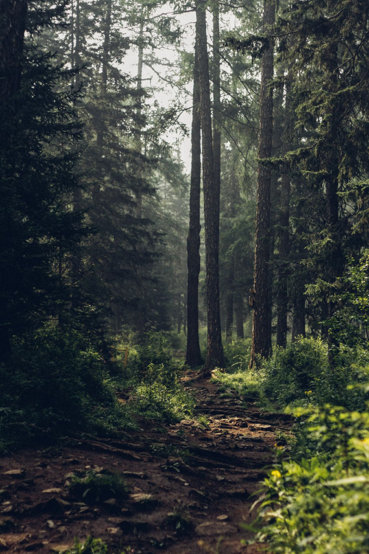 This Is A Nature Blog Forest Pictures Forest Photography Forest Background
