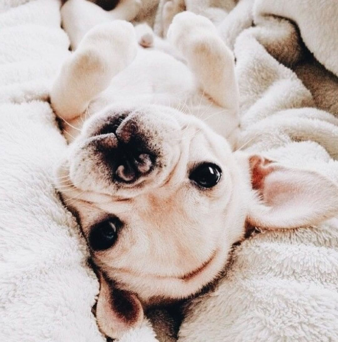 Cute Puppies Puppies Of Instagram Cute Dogs Dogs Of Instagram