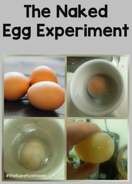 Gross! Naked Egg Science Experiment with Vinegar   Kids