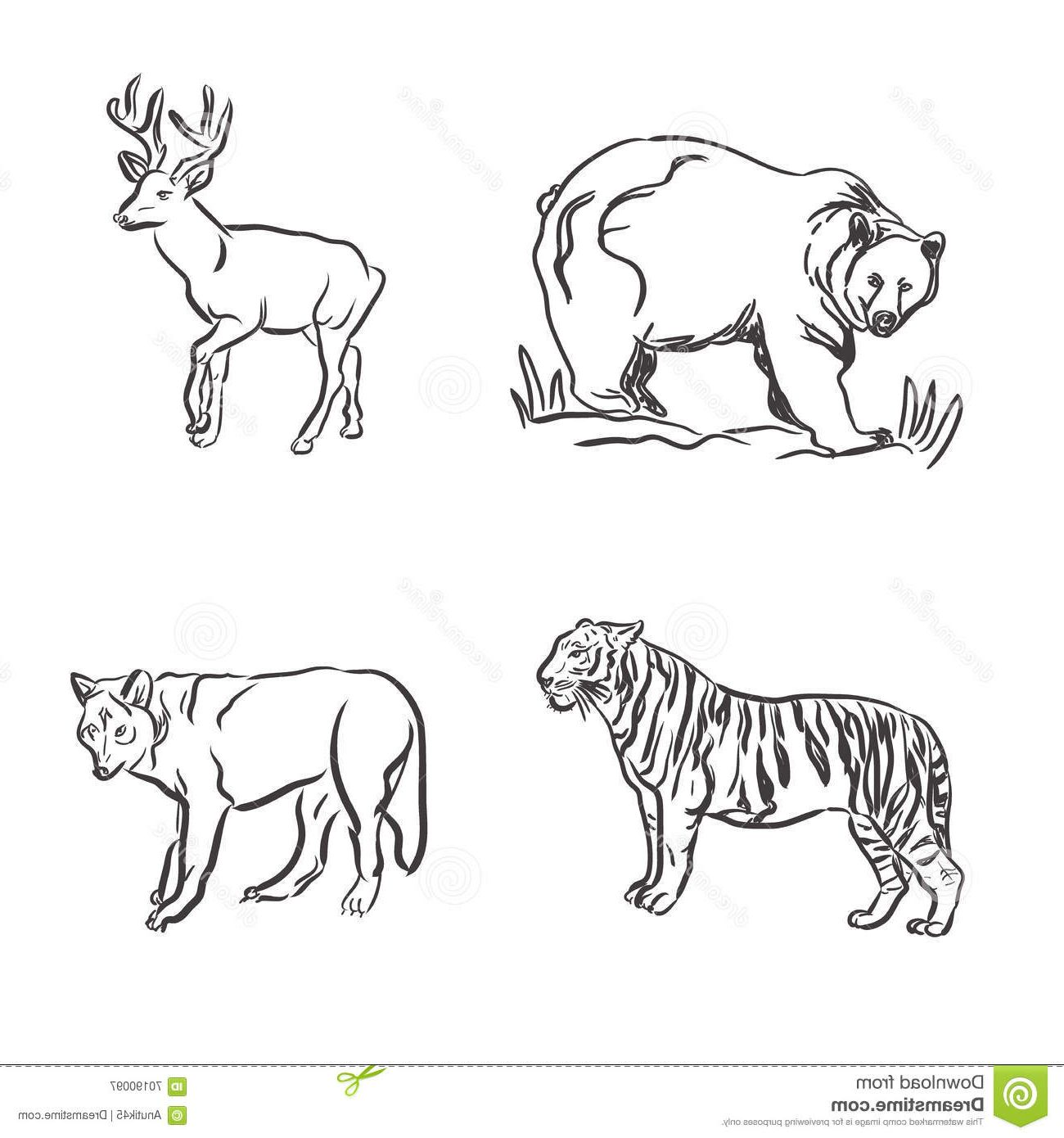 Wild animals draw yahoo canada image search results