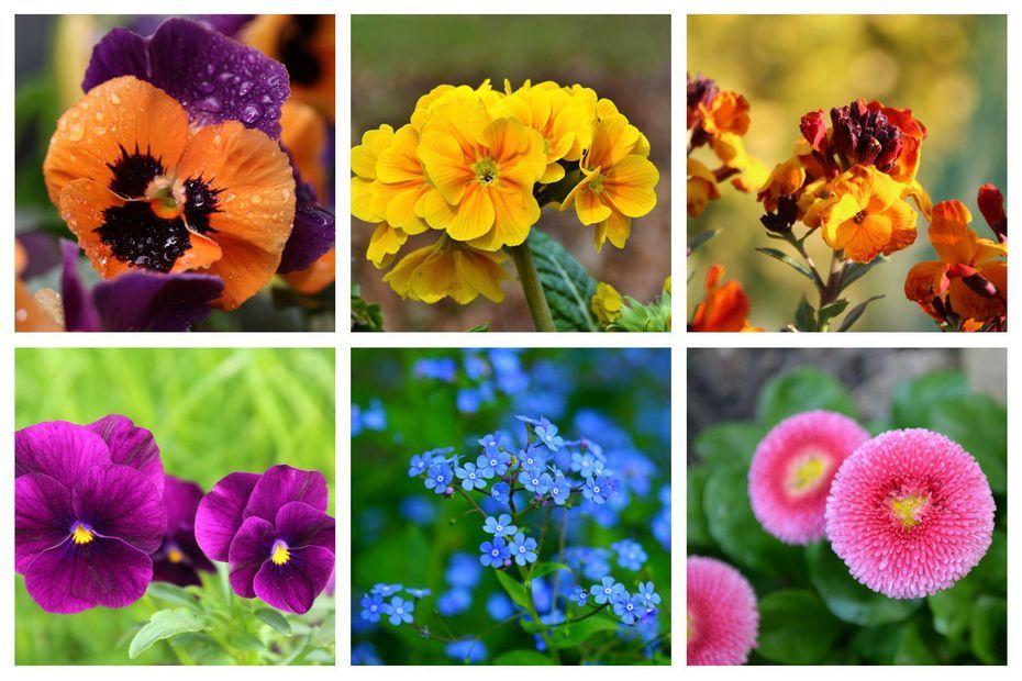 Jardinage Plantez Des Septembre Des Fleurs Pour 10 Mois De Floraisons Non Stop En 2020 Fleur Hiver Planter Des Fleurs Deco Exterieur Jardin