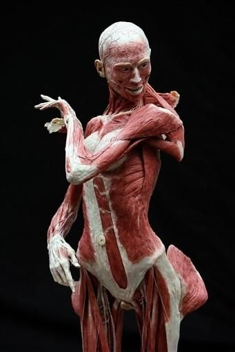 Interesting Ways To Greet The Afterlife Anatomy Art Bodies Exhibit Anatomy For Artists