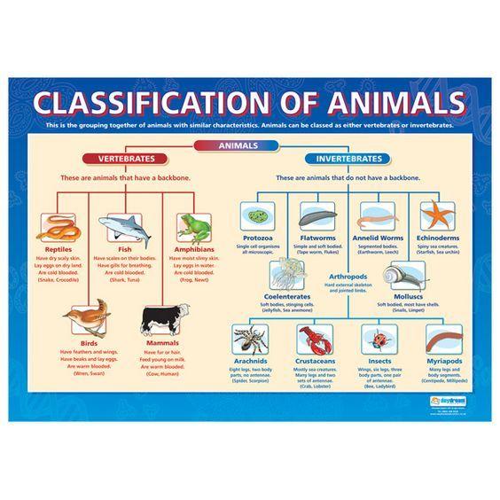Mrparke Licensed For Non Commercial Use Only Sbi3u 04 Period 4 Animal Classification Vertebrates And Invertebrates Arthropods