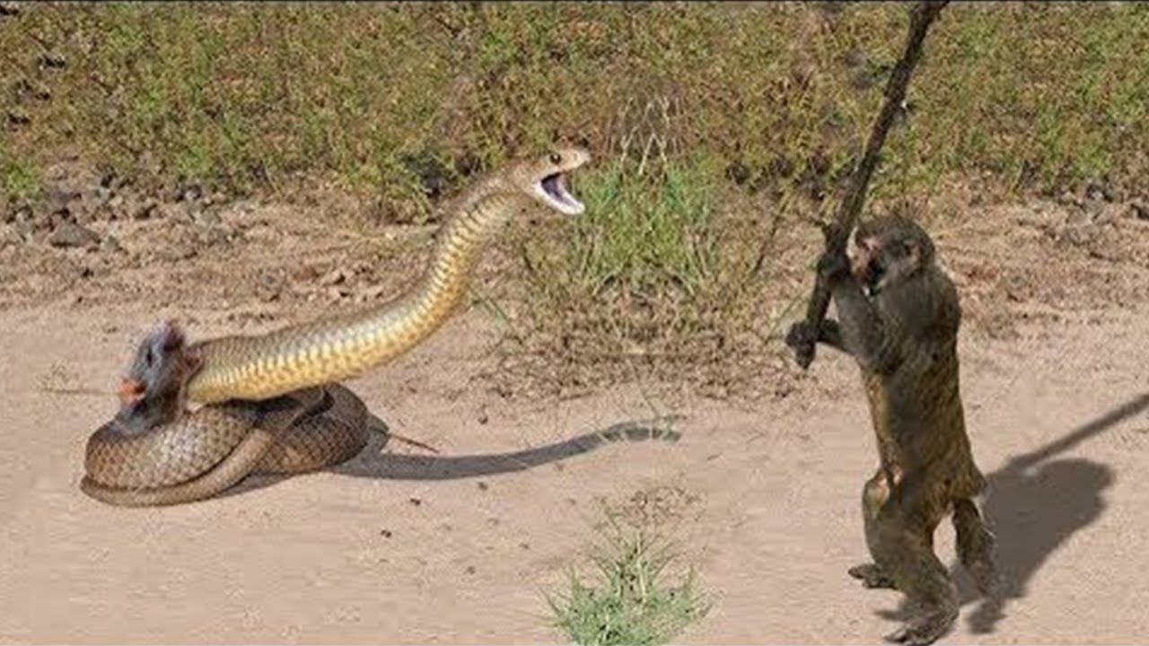 10 CRAZIEST ANIMAL FIGHTS CAUGHT ON CAMERA https//www