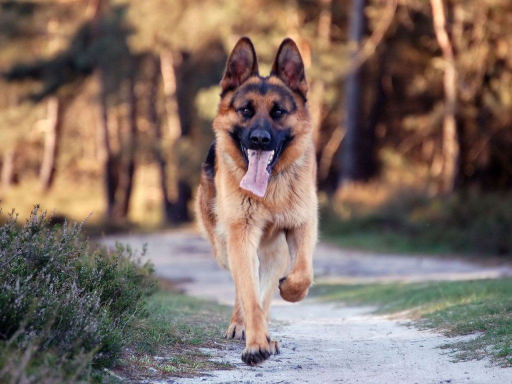 Dog For Adoption Free Image By Rawpixel Com