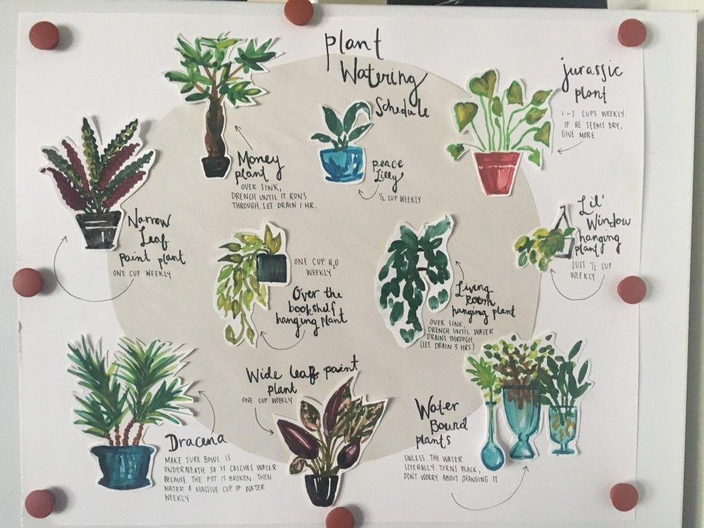 Beautiful plant watering schedule left for roommate while