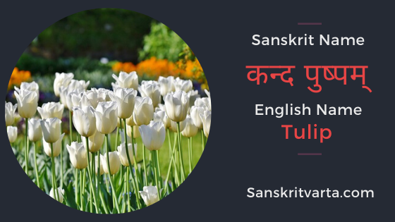 50 List Of Flowers Name In Sanskrit Language And Hindi With Pictures Sanskrit Learnsanskrit Sanskritvarta In 2020 Sanskrit List Of Flowers Flowers Name In English