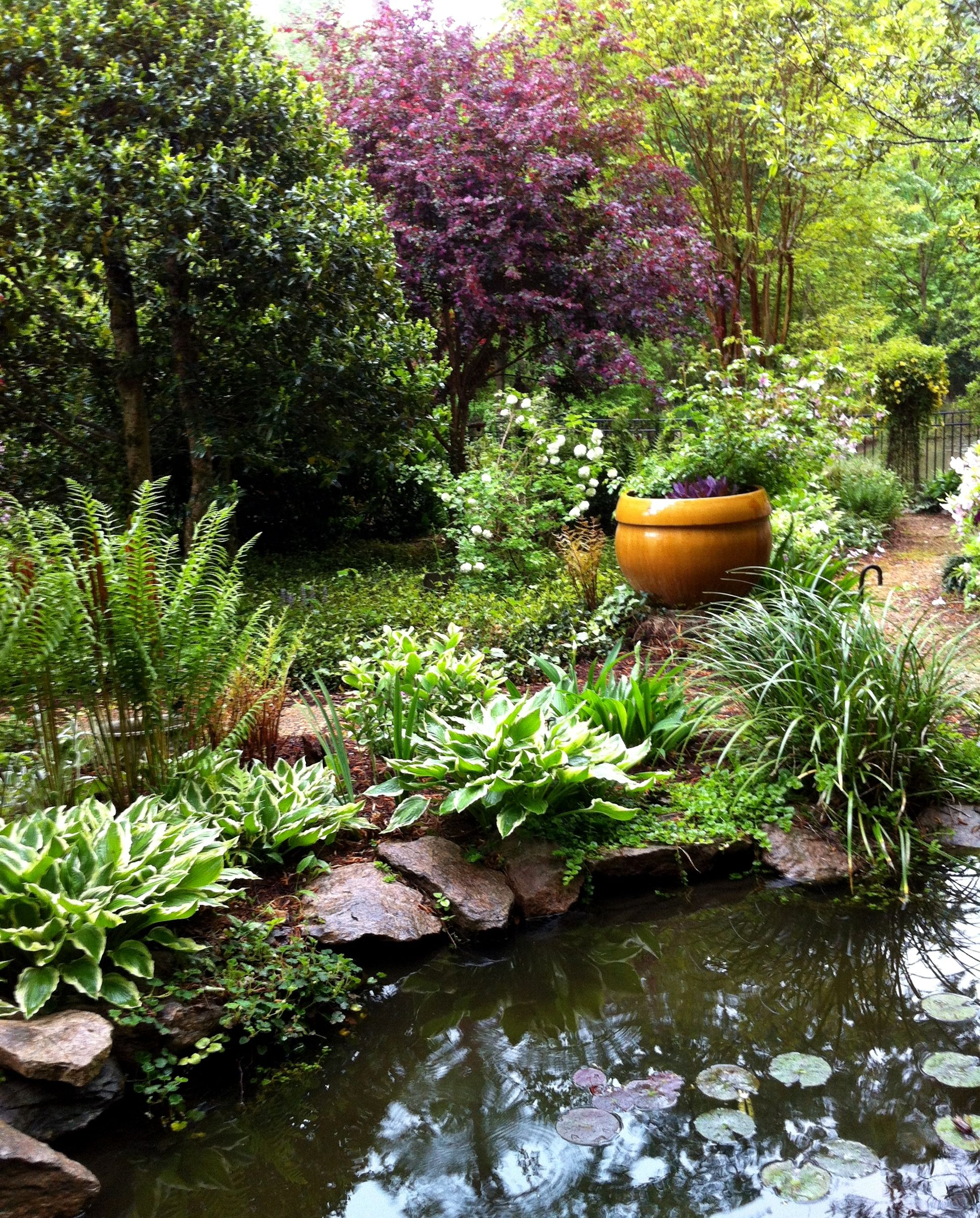 Ornamental pond with hostas and ferns pond pinterest for Landscaping around koi pond