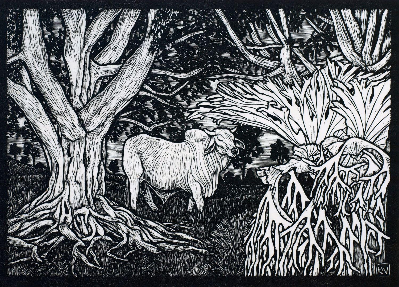 """brahman bull dunoon linocut by rachel newling http"
