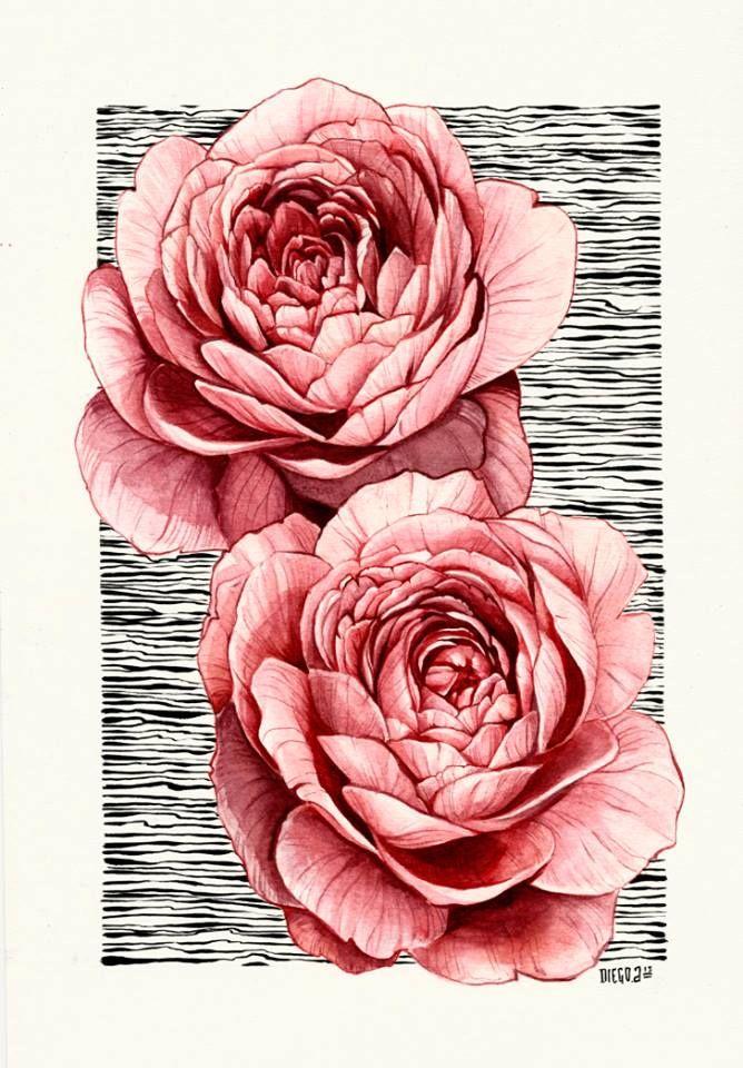 English Roses Watercolor Hinh Xăm Hinh Xăm Hoa Mau Nước