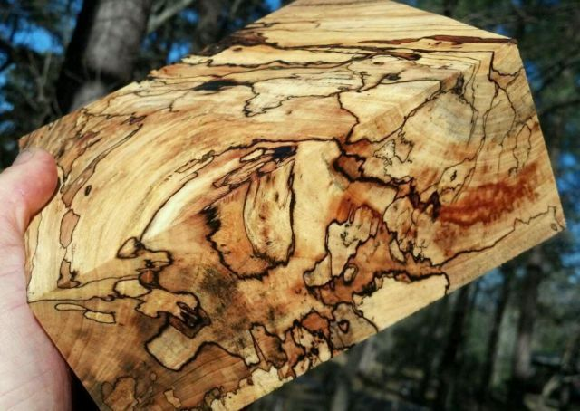 Spalted Hackberry Exotic Wood Things Pinterest