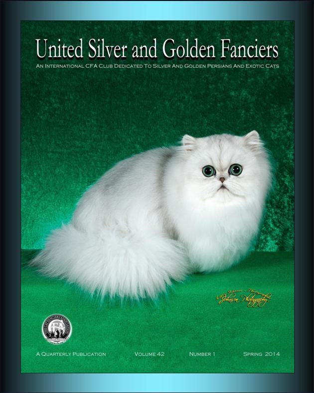 Alexandria Va Silver Persian Kittens For Sale Chinchilla Breeder Persian Kittens Persian Kittens For Sale Kittens