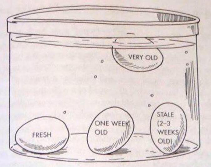 Eier testen ob sie gut sind