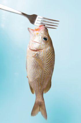 http://restaurantecarrayuncal.com/pescados-restaurante-carrayuncal/ ¡¡No te quedes sin probar nuestros deliciosos pescados!! Ven a conocer nuestro Restaurante Carrayuncal y disfruta de una comida casera, tradicional y moderna. Te animamos a degustar nuestros diferentes pescados frescos y con salsas especiales.