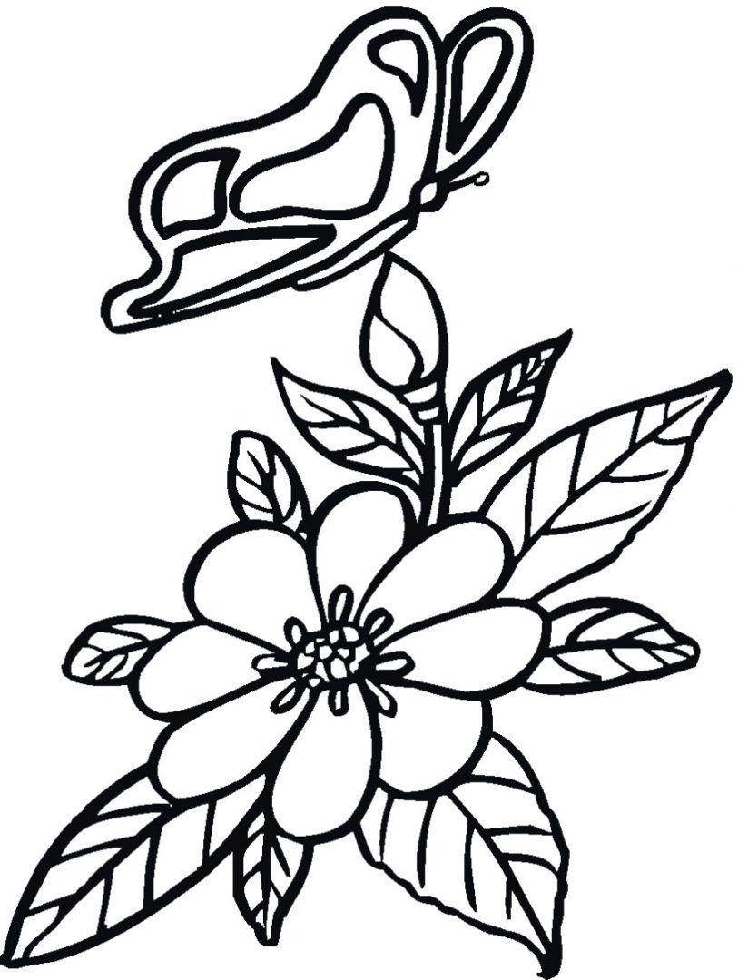 Dibujos de flores y mariposas  Pirograbado morro  Pinterest