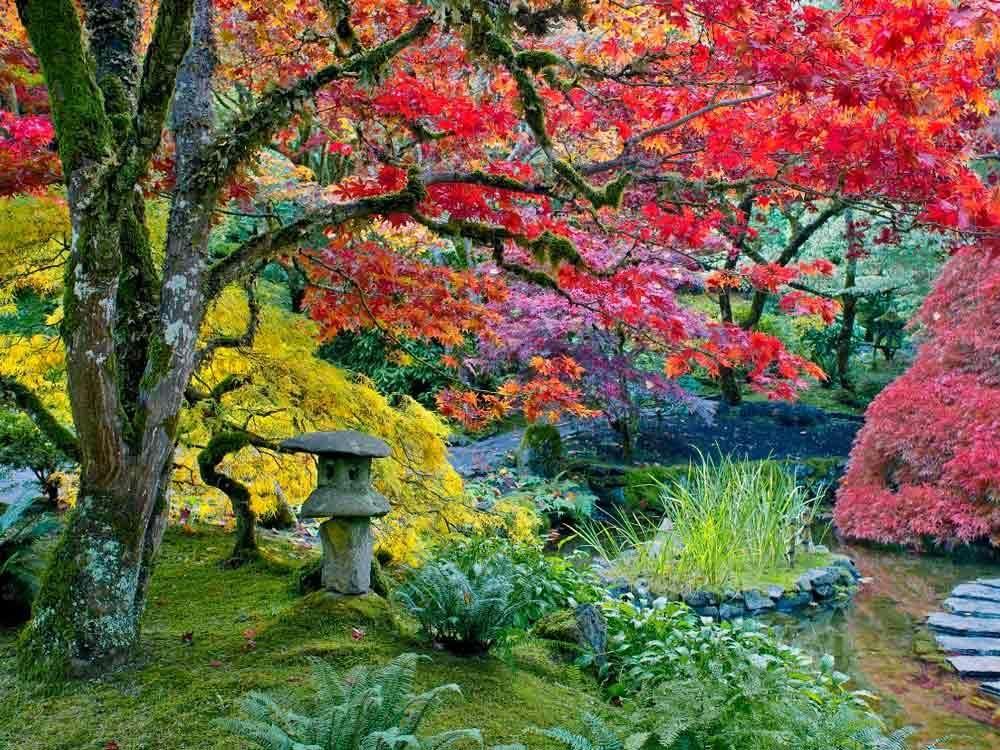Los colores del otoño - Jardines japoneses de Butchart (Canadá) Japan