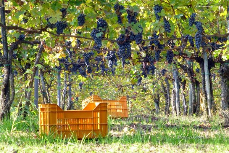 #Piemonte – #Bielmonte – #Colori d'autunno con #polenta | Max510's Blog #vendemmia in Piemonte