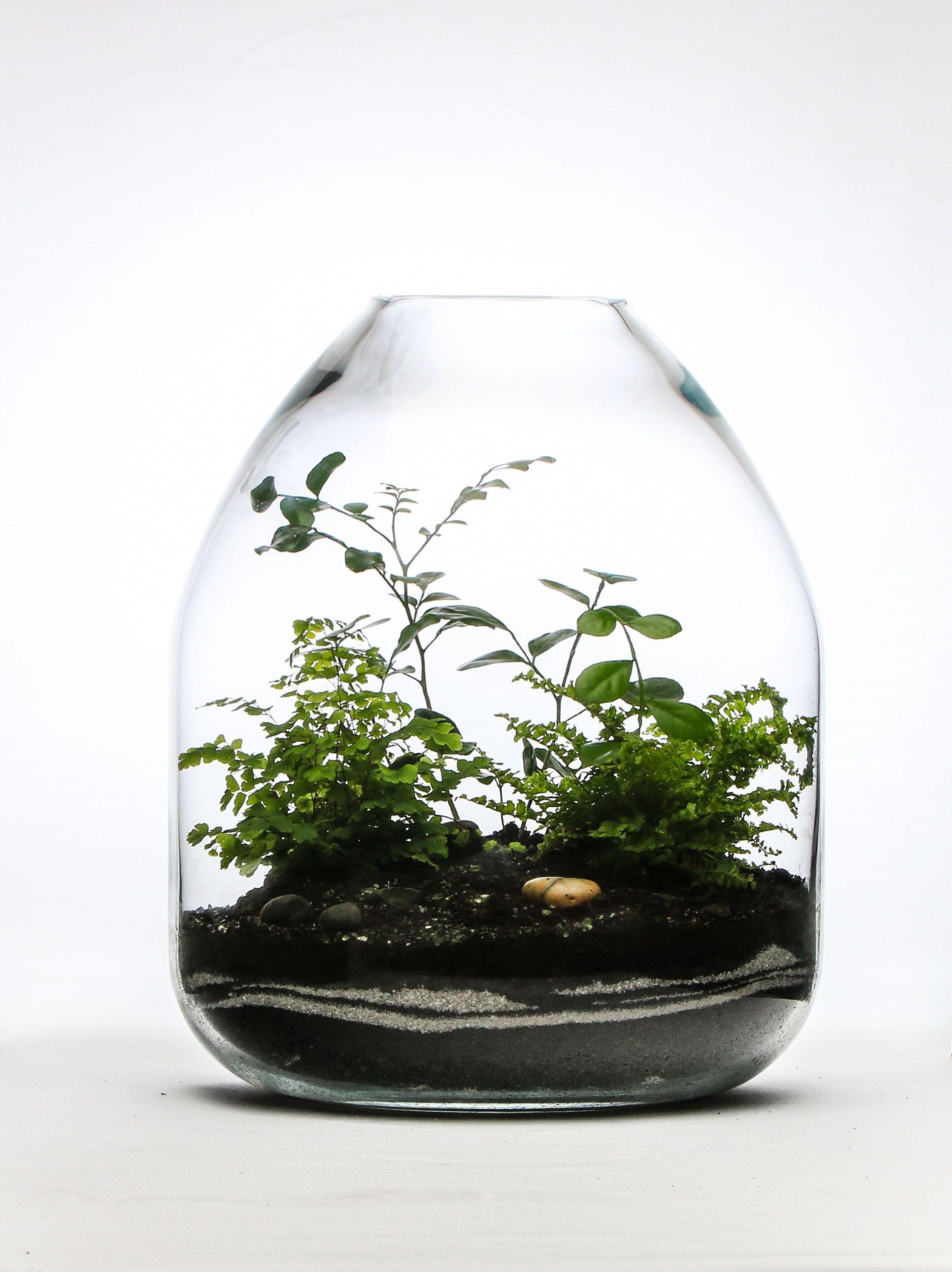 designer v g tal bordeaux et paris design original de terrarium en verre souffl bouche. Black Bedroom Furniture Sets. Home Design Ideas