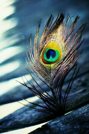 Morpankh Peacock Feather | RadheKrishna in 2019 | Shree