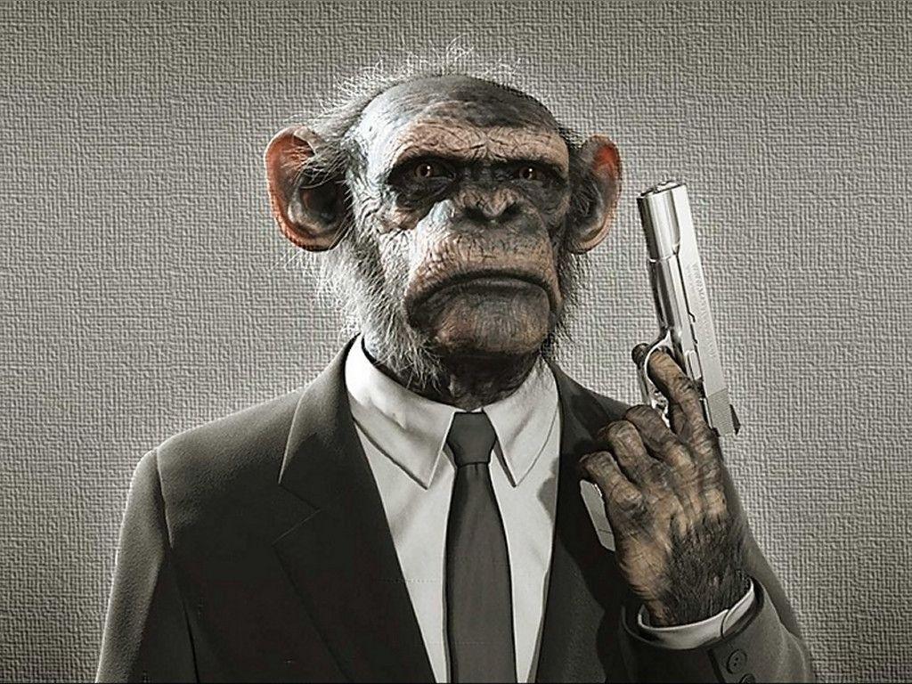 Monkey Wallpapers Free Download Best Wild Animals HD