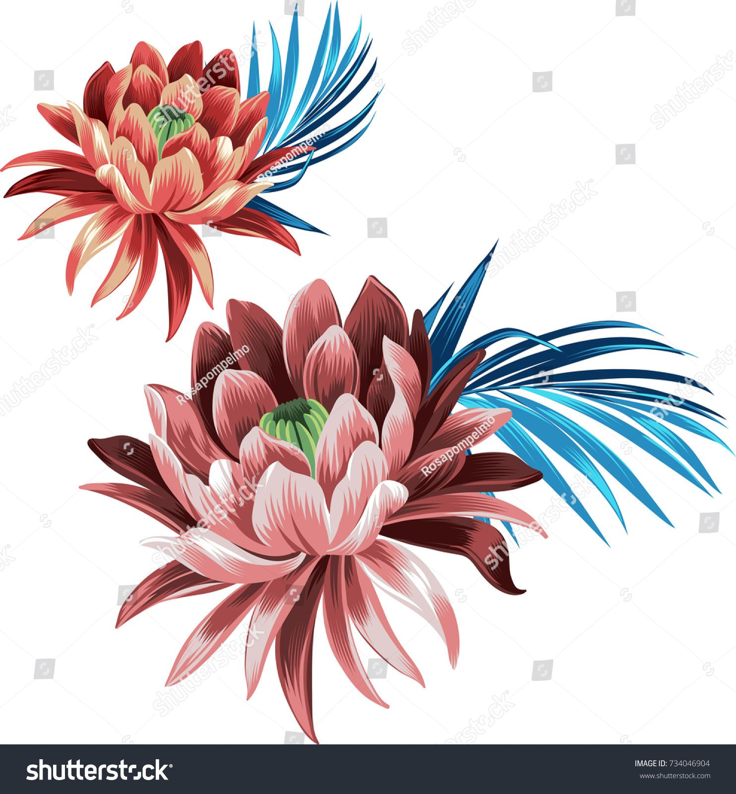 Set of lotus flowers with leaves. Vector waterlily
