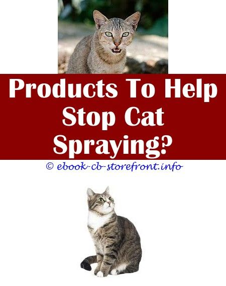 Fantastic Tricks Can Change Your Life How To Remove Cat Spray