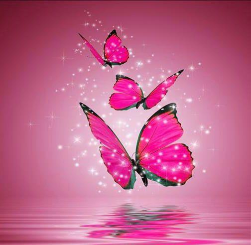 Fondos de pantalla de mariposas buscar con google for Buscar imagenes de fondo de pantalla