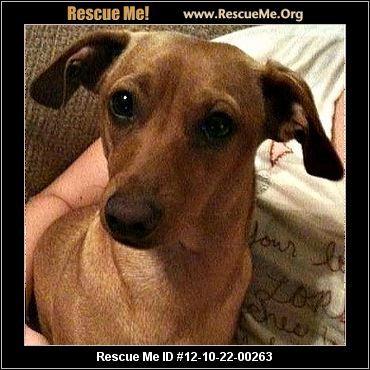 Nick Oklahoma Dachshund Rescue Adoptions Rescueme Org