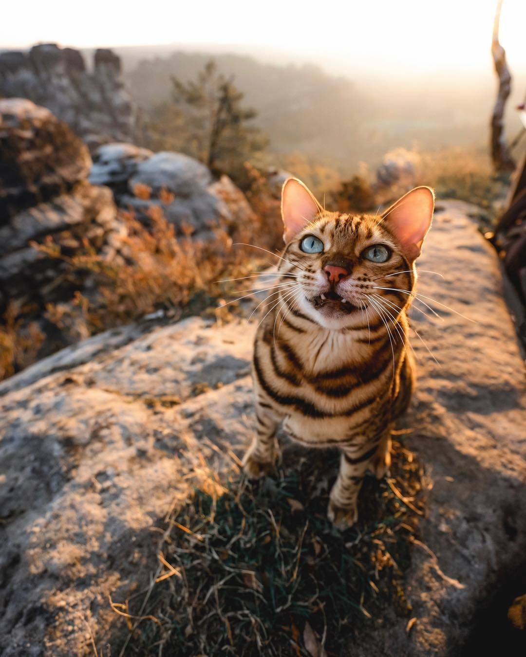 Pin by John Hassemer on AJohnny s List Cats, Adventure