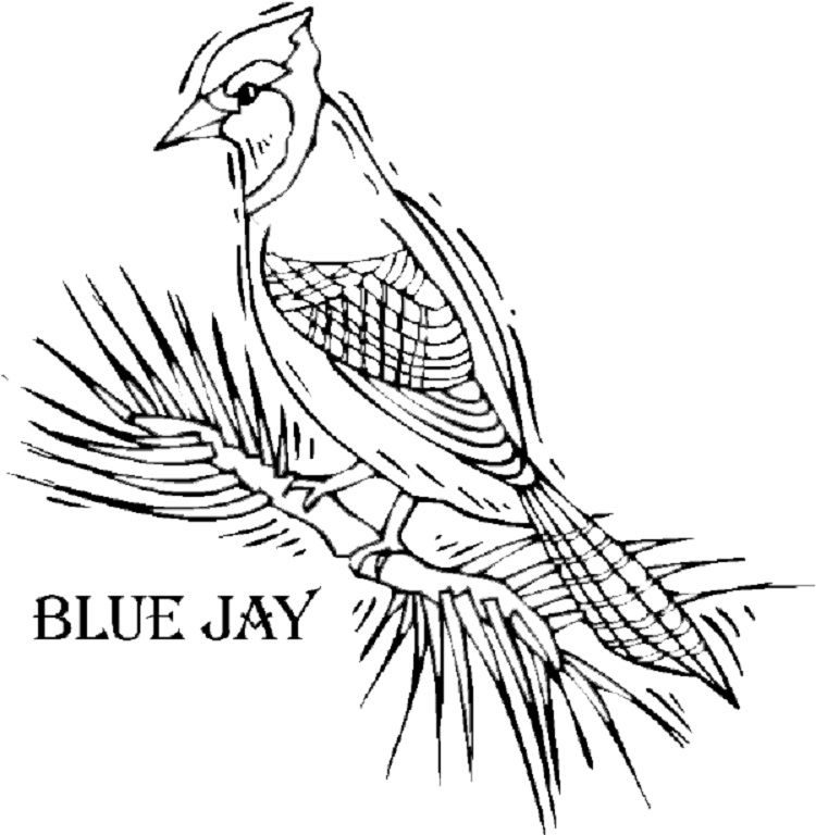 Blue Jay And Sunflowers Coloring Page Bird Coloring Pages Sunflower Coloring Pages Blue Jay Bird