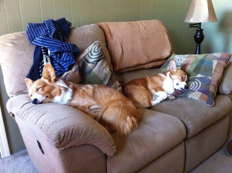 Comfy Cozy Corgi's