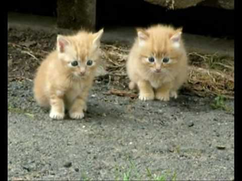 4 Week Old Kittens At Play For The First Time On View Sooooooo Cute