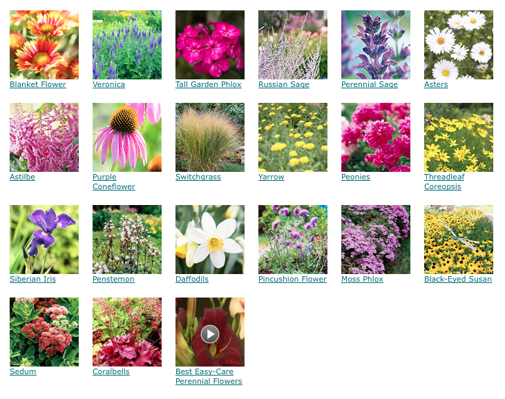 Pin On Wildflower Your Yard