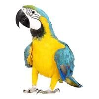 Pin By Pro Kol On Stuff To Buy Pet Birds Macaw African Grey Parrot