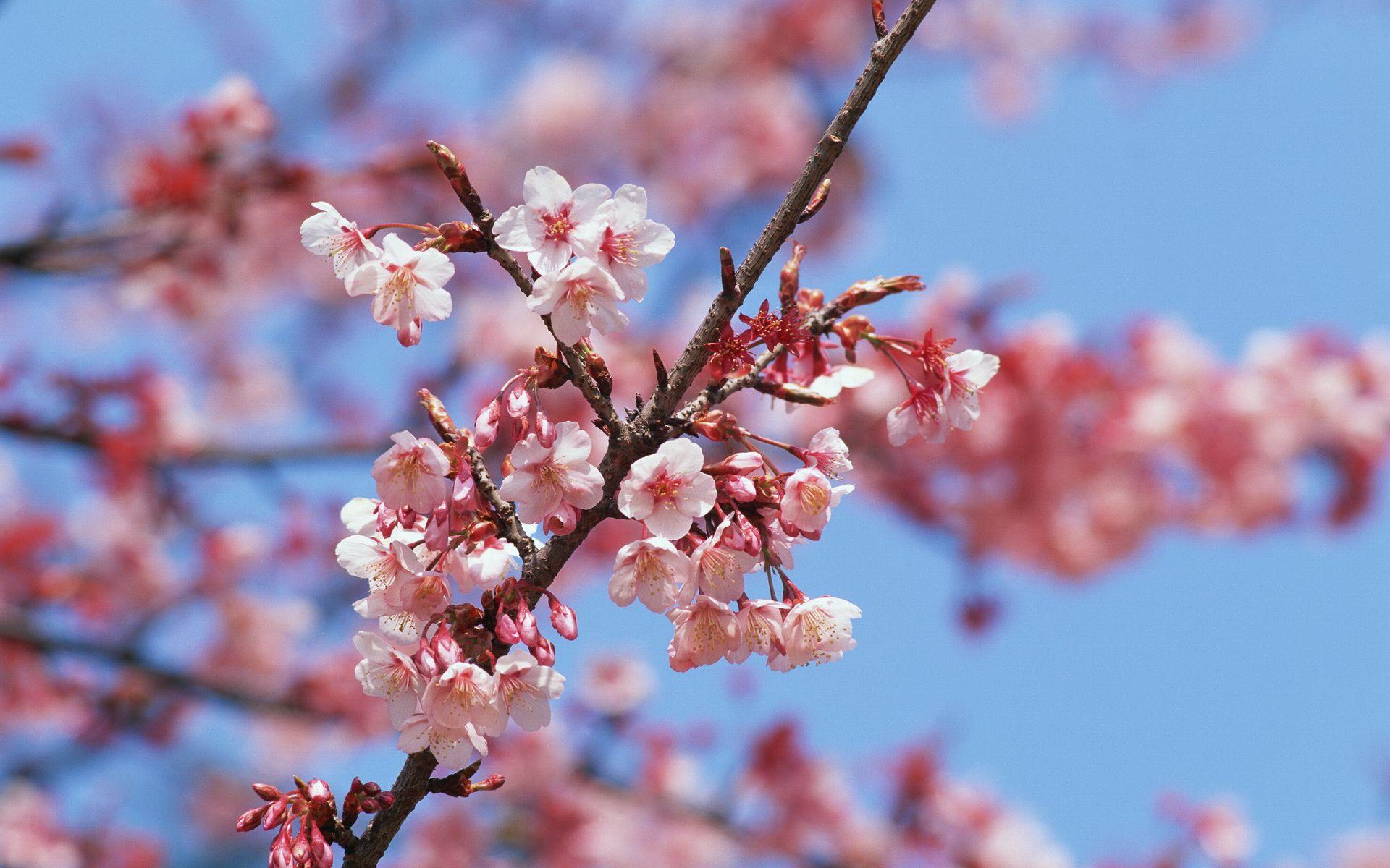 Artificial Cherry Blossom Tree Artificial Cherry Blossom Tree Artificial Plants Indoor Artificial Plants