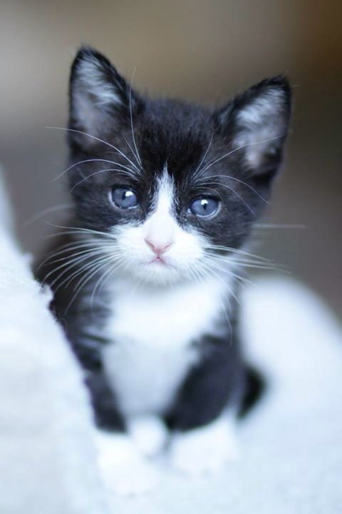 Pin By Eric Sean On Cuteness Overload Cute Cats Kittens Cutest