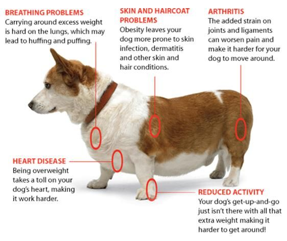 Image result for most common dog diseases