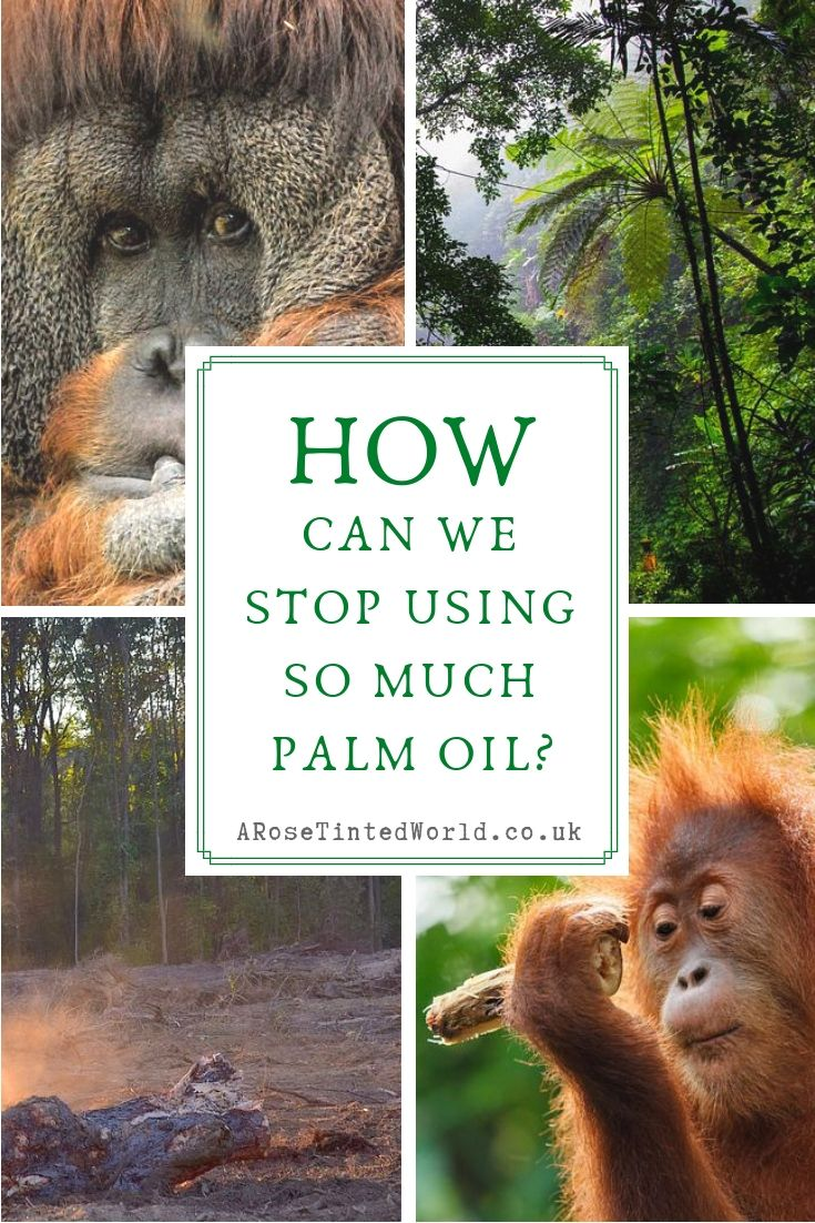 How Can We Stop Using So Much Palm Oil? ⋆ A Rose Tinted