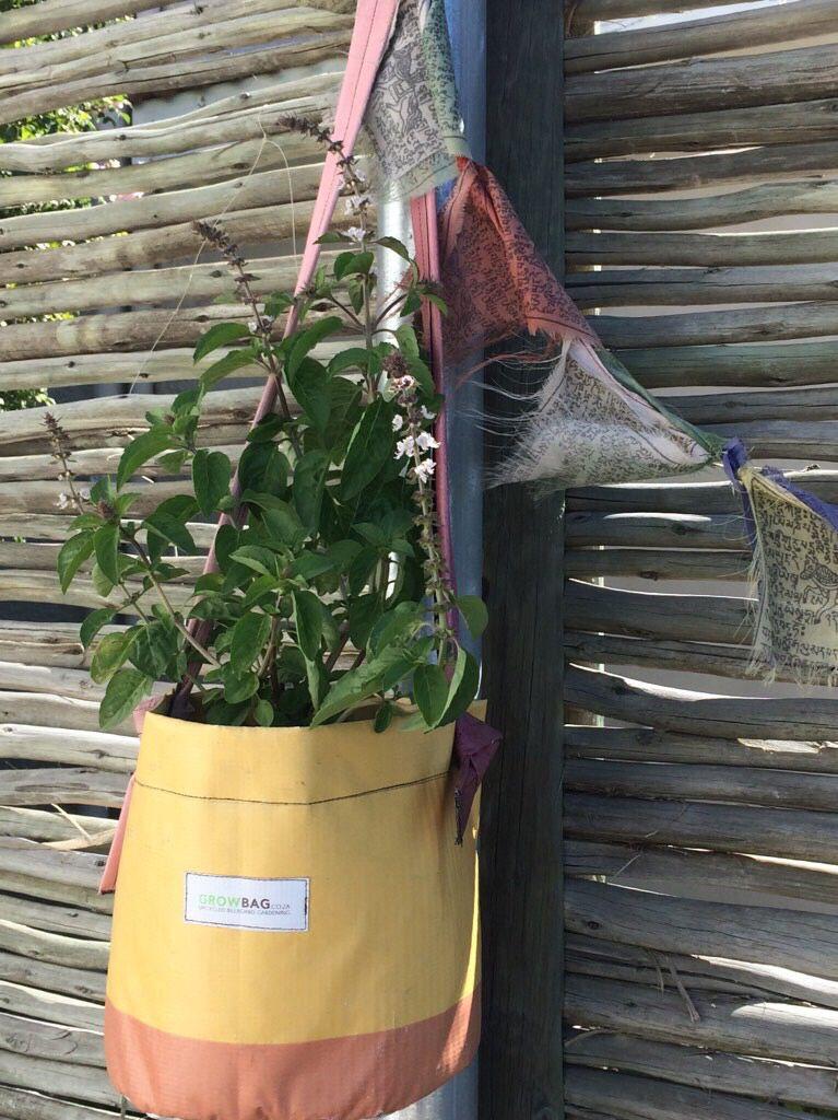 Growing basil in a growbag planter size m urbangardens
