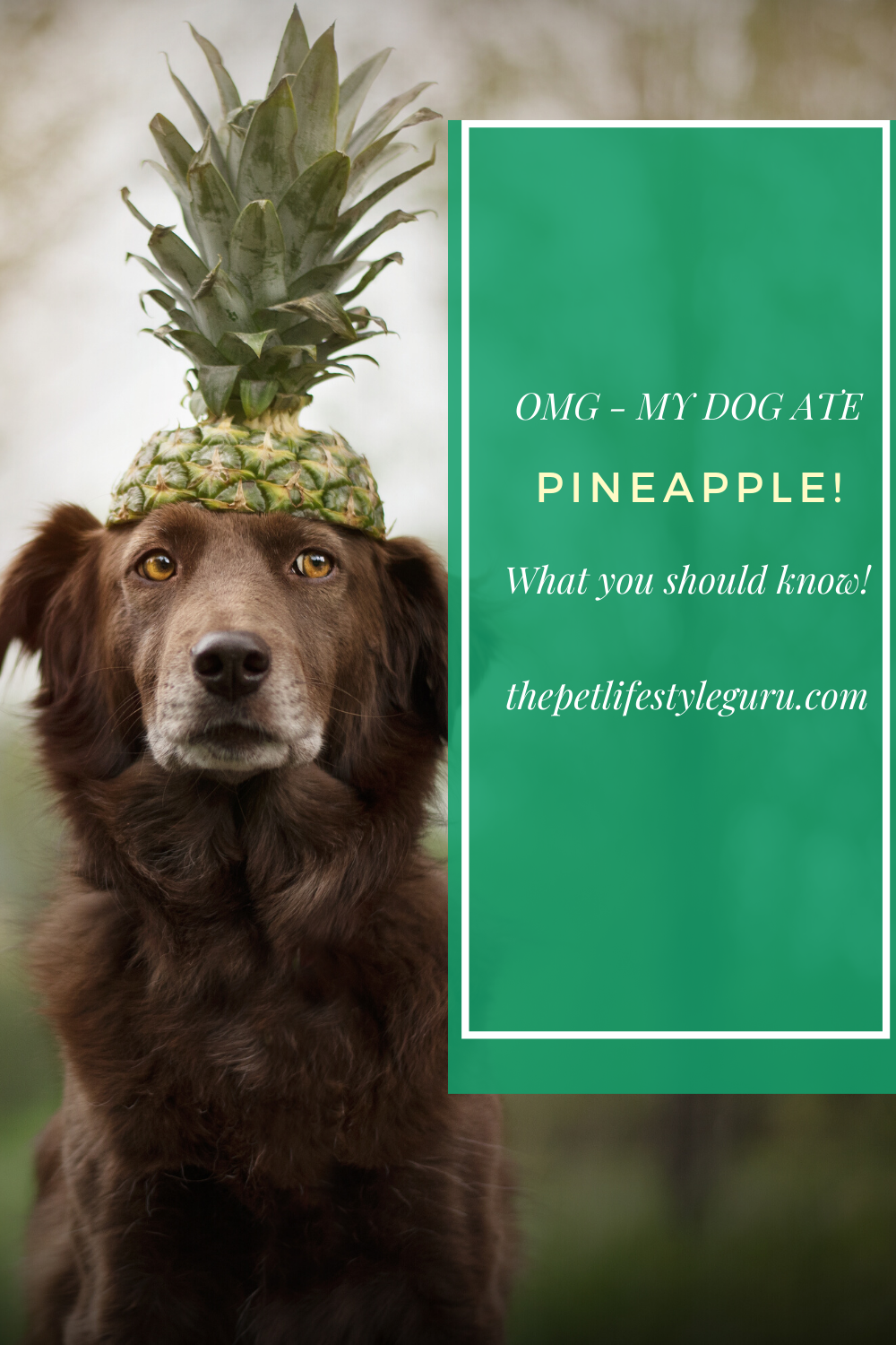 Dog Ate Pineapple? Don't Freak Out Here's Why in 2020