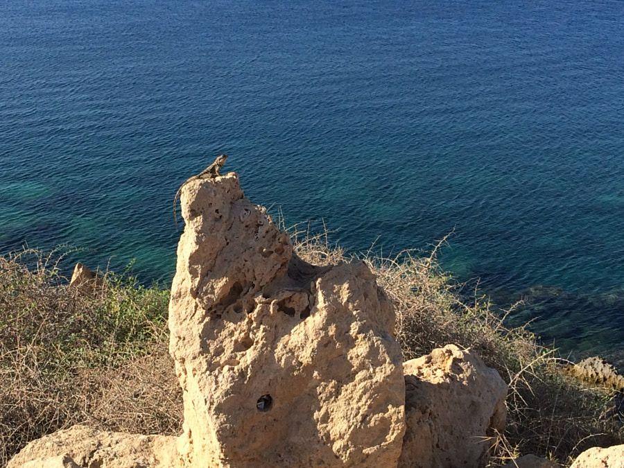 ★ Everyone loves a sea view - even lizards! ★ https://plus.google.com/+PissouribayCyp/posts/B3DskVrr4zC