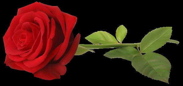 Red Rose With Stem Transparent Png Clip Art Image Red Rose Png Red Roses Rose