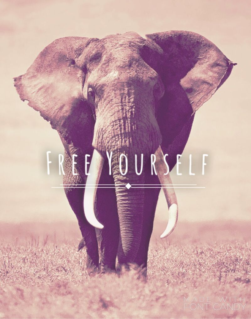Iphone 6 Elephant Wallpaper Made This Using The App Font